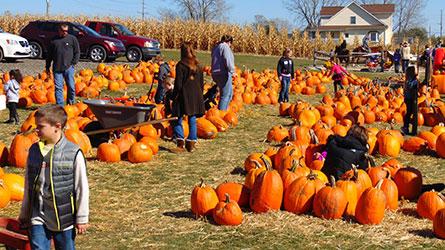 5 pumpkin patches to visit outside of halton   inhalton. Com.